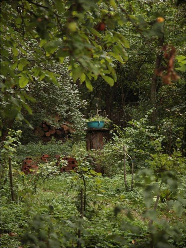 Ovocný jedlý les, foto: Michal Opeta, foto: Ovocná farma Kubra