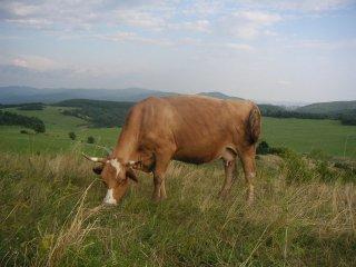 Kravička, Farma Turová