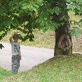 Strom učenlivý