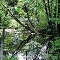 Stromy a voda- intímne stretnutie