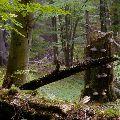 Krása slovenských pralesov