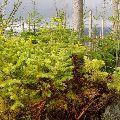 Prirodzené zmladenie na mŕtvom dreve - život pokračuje