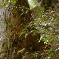 Interiér slovenského pralesa
