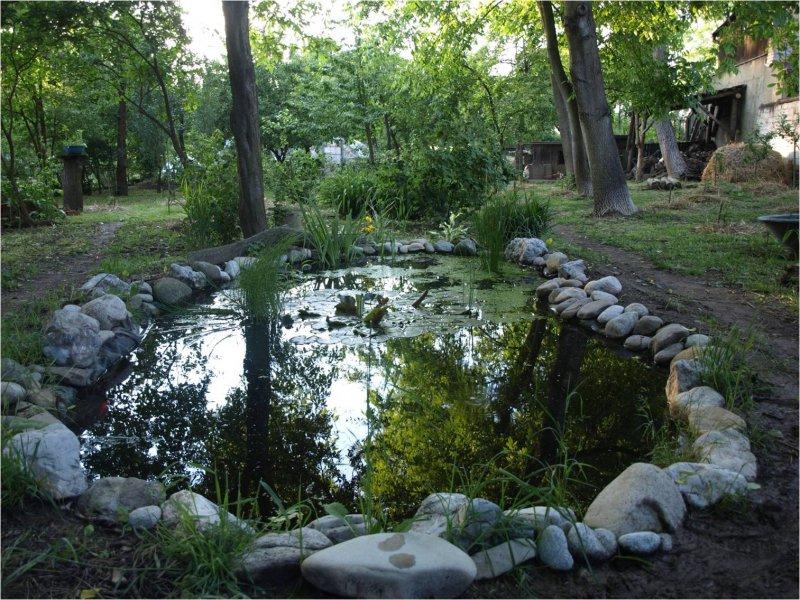 Jazierko v prírodnej záhrade