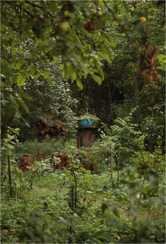 Jedlý les - ovocná farma Kubra