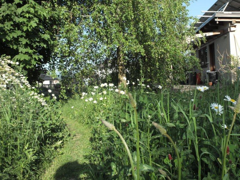 Kúsok záhrady ako lúka