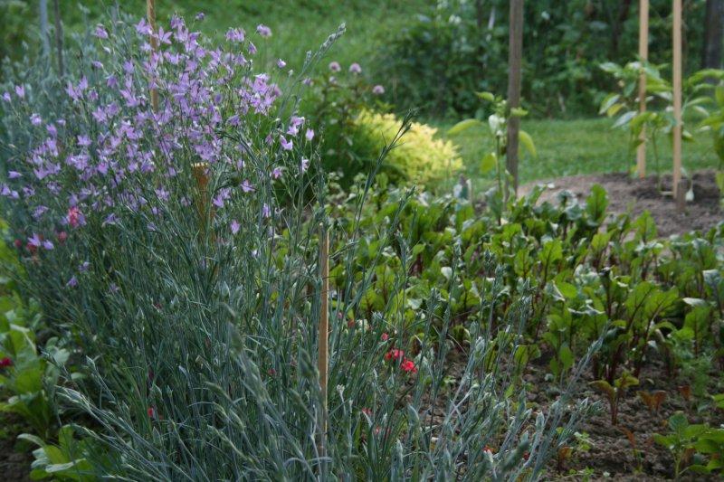 Kvety, bylinky aj zelenina