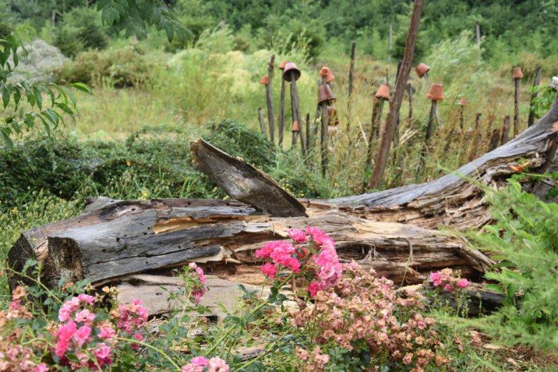 Mŕtve drevo ako útočisko pre hmyz
