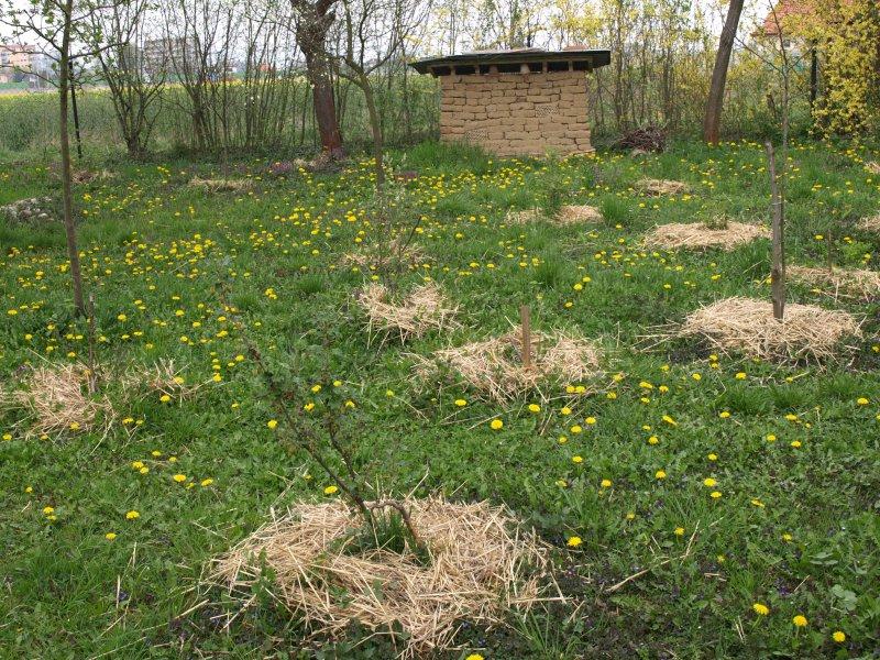 mulčovanie - nastielanie pôdy...
