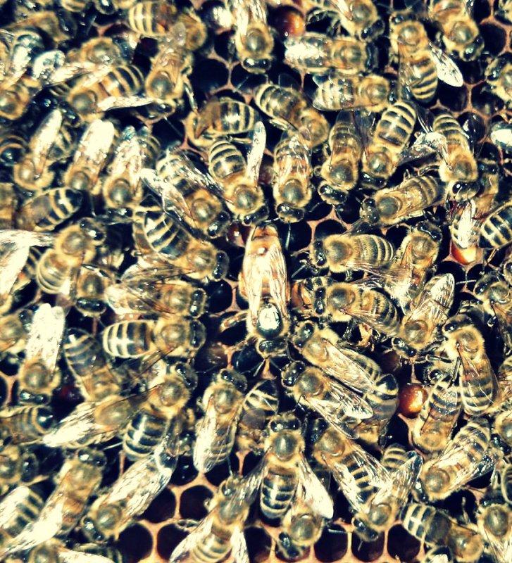 Nová Matka v úli