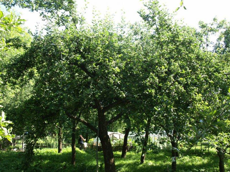 Ovocný sad - ovocná farma