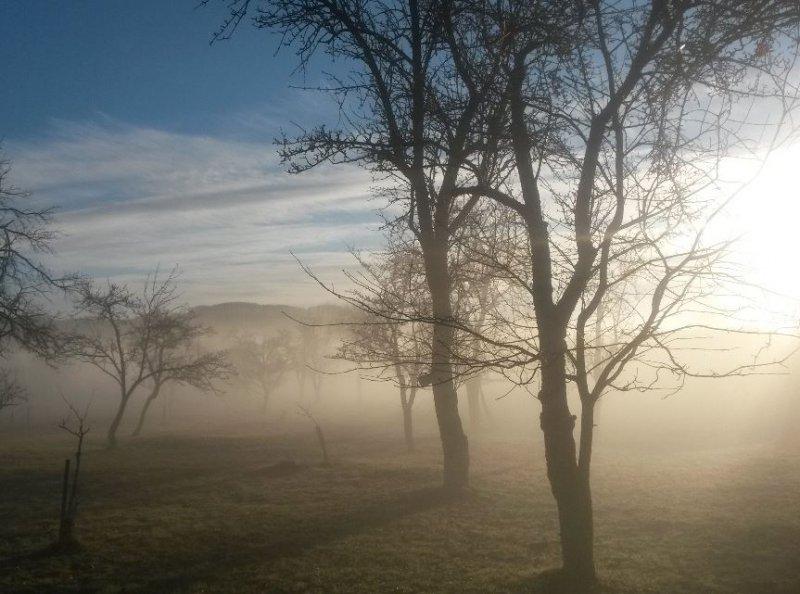 Snové ráno v prírodnej záhrade