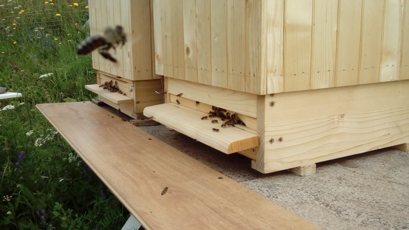Včielka prilieta