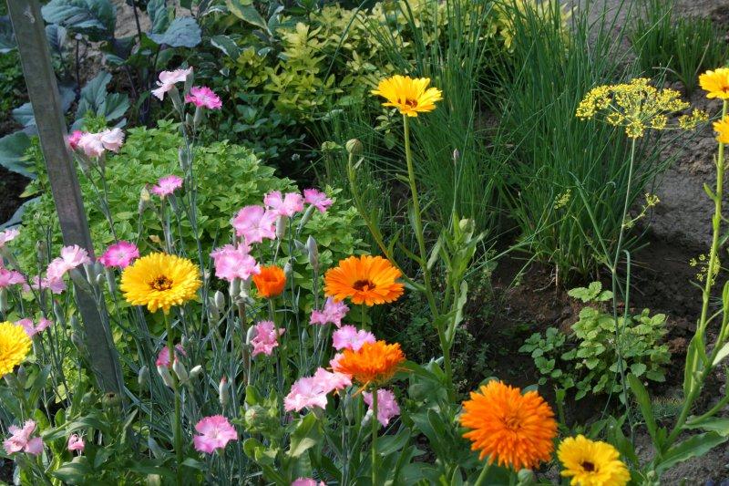 Záhradka pre radosť