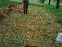 bezorebné pestovanie zemiakov