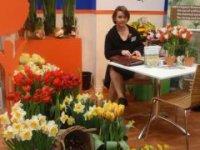 bio narcisy, tulipány
