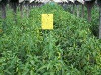 biopestovanie v skleníku