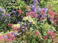 divoké zákutia v zahrade