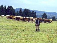 farma sklené - pastier