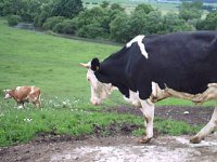 farma velits - Černuša