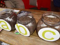 hlasovanie o miss kompost 2015