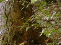 interier pralesa