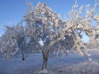 Jablonka v zimnom šate,  foto: Klaudia Medalová