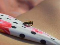 kamarátka včielka