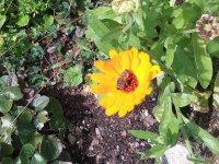 kde je včela...tam je život.