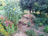 kompost: viera roháčová, dechtice