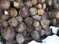 kopa dreva - zimovisko pre hmyz