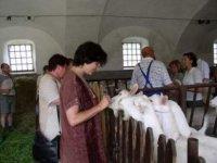 kozia farma dobrovolných