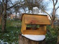 kŕmenie vtákov v zime