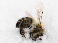 Krutá zima,  foto: Erika Molnárová