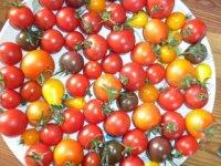 Mňam rajčinky,  foto: Drahomíra Mareková
