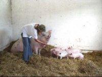 Na rodinnej farme...,  foto: Richard medal