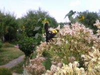 nie som osa ani včela, ale nektár obľubujem i ja!