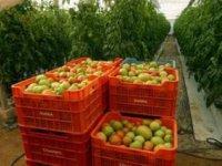 Nie sú rajčiny ako rajčiny | Greenpeace