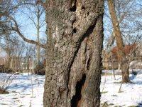 odumreté drevo stromov