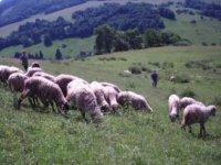 ovčia ekofarma Červený kameň