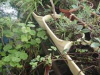 pestrosť v prírodnej záhrade