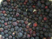 plody muchovníka - kanadskej čučoriedky