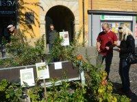 ponuka tradičných krajových odrôd ovocných stromov