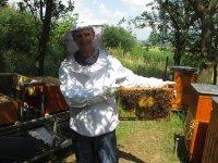 práca vo včelnici