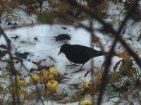 prikrmovanie vtákov