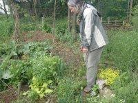 prírodná záhrada...