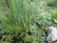 prírodné záhrady