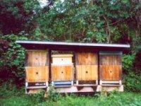 silné včelstvá