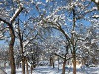 Slnečný deň v ovocnom sade,  foto: Alena Pohorencová