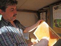 Stáčanie medu,  foto: Simona Ružičková